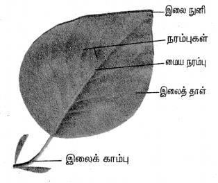 Samacheer Kalvi 4th Science Guide Term 2 Chapter 3 தாவரங்கள் 2