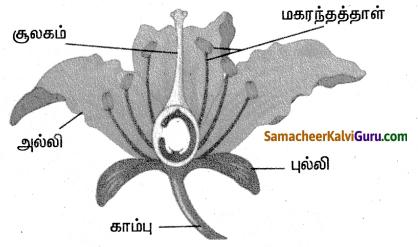 Samacheer Kalvi 4th Science Guide Term 2 Chapter 3 தாவரங்கள் 3