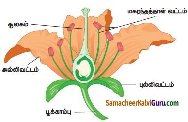 Samacheer Kalvi 4th Science Guide Term 2 Chapter 3 தாவரங்கள் 8