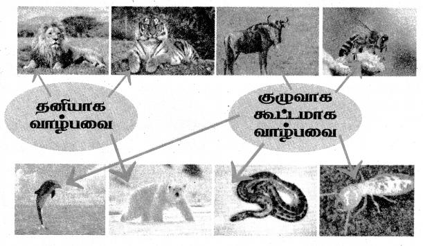 Samacheer Kalvi 4th Science Guide Term 3 Chapter 2 விலங்குகளின் வாழ்க்கை 2