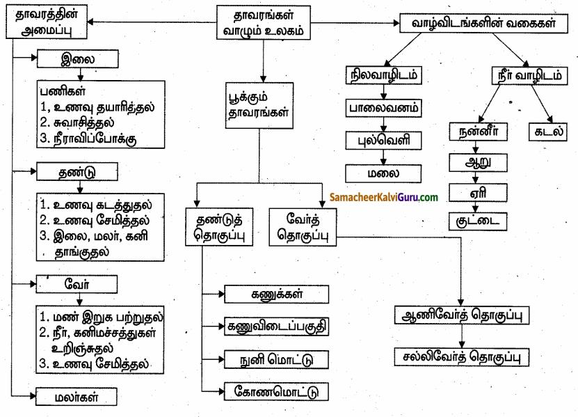 Samacheer Kalvi 6th Science Guide Term 1 Chapter 4 தாவரங்கள் வாழும் உலகம் 98