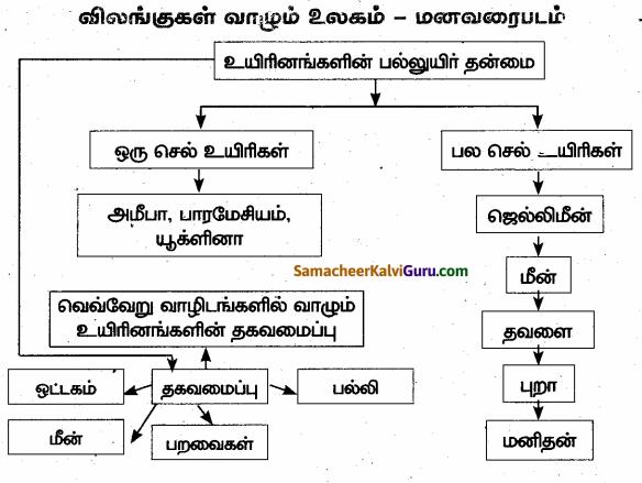 Samacheer Kalvi 6th Science Guide Term 1 Chapter 5 விலங்குகள் வாழும் உலகம் 90