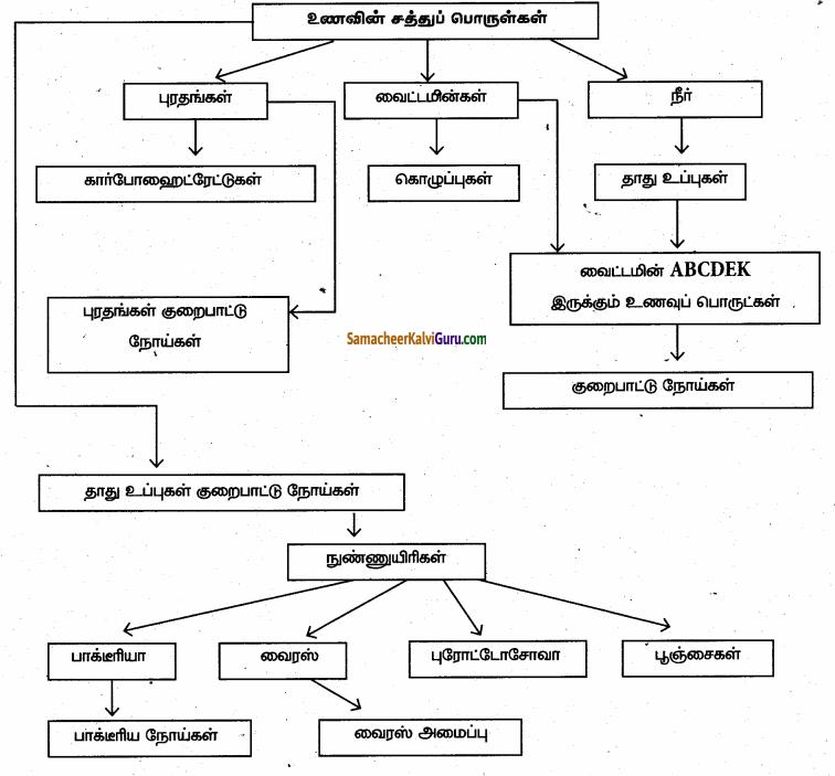 Samacheer Kalvi 6th Science Guide Term 1 Chapter 6 உடல் நலமும் சுகாதாரமும் 99.1