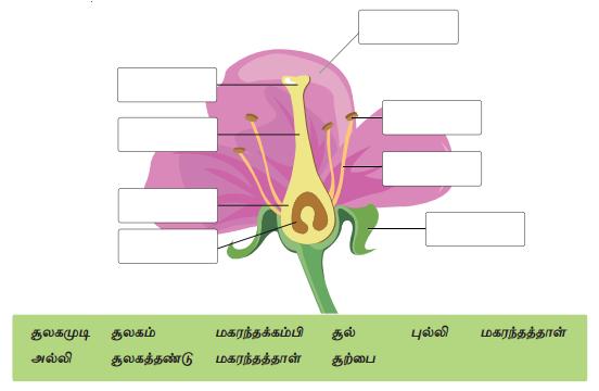 Samacheer Kalvi 7th Science Guide Term 1 Chapter 5 தாவரங்களின் இனப்பெருக்கம் மற்றும் மாற்றுருக்கள் 12