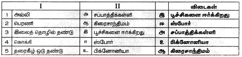 Samacheer Kalvi 7th Science Guide Term 1 Chapter 5 தாவரங்களின் இனப்பெருக்கம் மற்றும் மாற்றுருக்கள் 2
