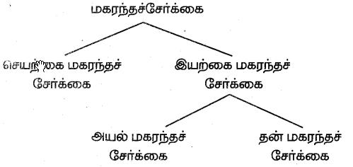 Samacheer Kalvi 7th Science Guide Term 1 Chapter 5 தாவரங்களின் இனப்பெருக்கம் மற்றும் மாற்றுருக்கள் 4